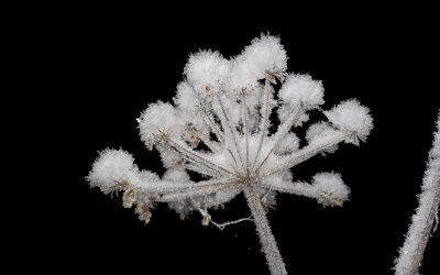 Talvinäyttely jatkuu helmikuun ajan